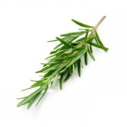 Krydderurter Rosmarin