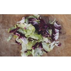 Isberg Radiccio Salatblanding