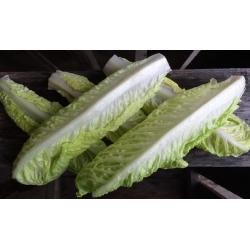 Salat Romano Skyllede Blader