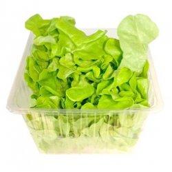 Salat Ekeblad Grønn