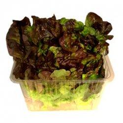 Salat Ekeblad Rød