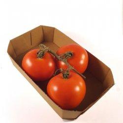 Økologisk Tomater på gren i beger